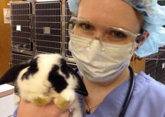 My Pets Animal Hospital - Lakeland, FL