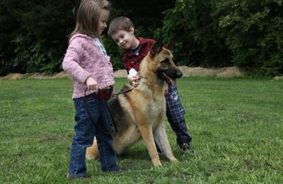 Appleridge German Shepherds - Griffin, GA