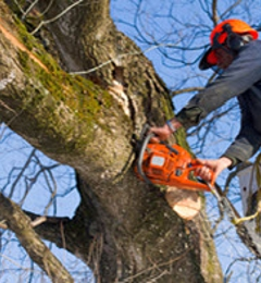 Brooks Tree Service & Forest Products - Kingsley, MI