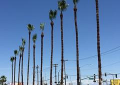 B & M Gardening & Tree Services - Bakersfield, CA