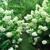 Heinz Nurseries & Landscaping