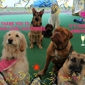 Rosie's Doggie Day Care & More - Saint Louis, MO