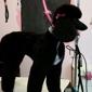 All Fur Pet Grooming - Fredericksburg, VA