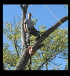 Norris Tree Service - West Plains, MO. Norris Tree Service