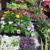 El Jardin Flower and Garden Room