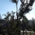 Carrillo Tree Service