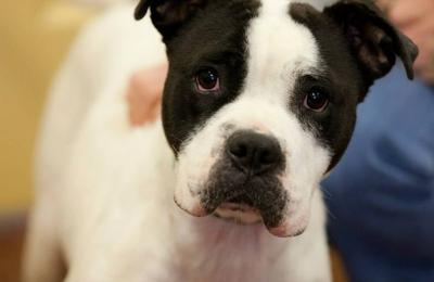 Etowah Valley Humane Society - Cartersville, GA