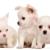 Puppies TO GO