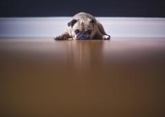 Preppy Pet Boarding Suites