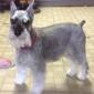 Hair Of The Dog - Hazleton, PA