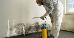 Reliable Mold Remediation