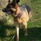 Rodak Dog Training - Rubicon, WI