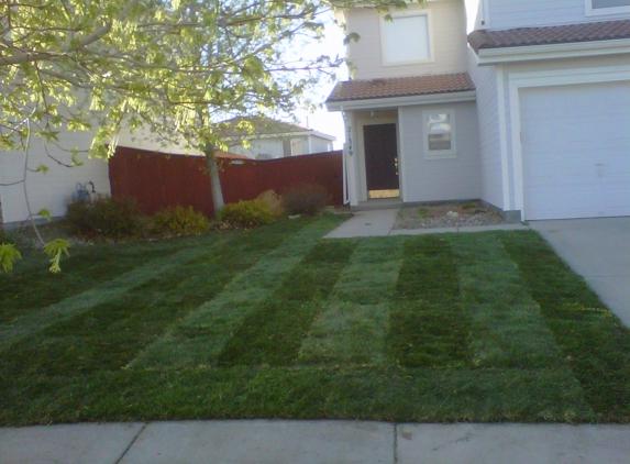 Lawn Pro Solutions - denver, CO