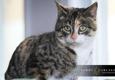 Danville Area Humane Society - Danville, VA