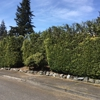Mike's Affordable Tree Service