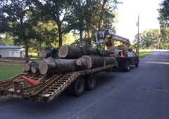 Crenshaw Tree Service - Little Rock, AR