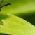 Roundtree's Pest Control Inc