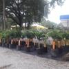 Citrus Park Landscape Nursery