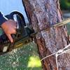 Hodgson Tree Service Inc
