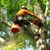 Geddie's Tree Service