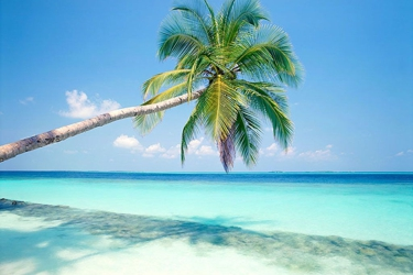 Cruise Tours Travel