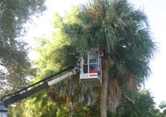 On Budget Tree Service - Ocala, FL