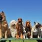 Lincoln Avenue Veterinary Clinic - San Jose, CA