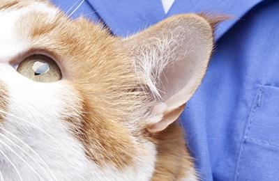 Atlanta Veterinary Dental Service - Alpharetta, GA