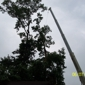 Bills A1 Professional Tree Service - Chuckey, TN