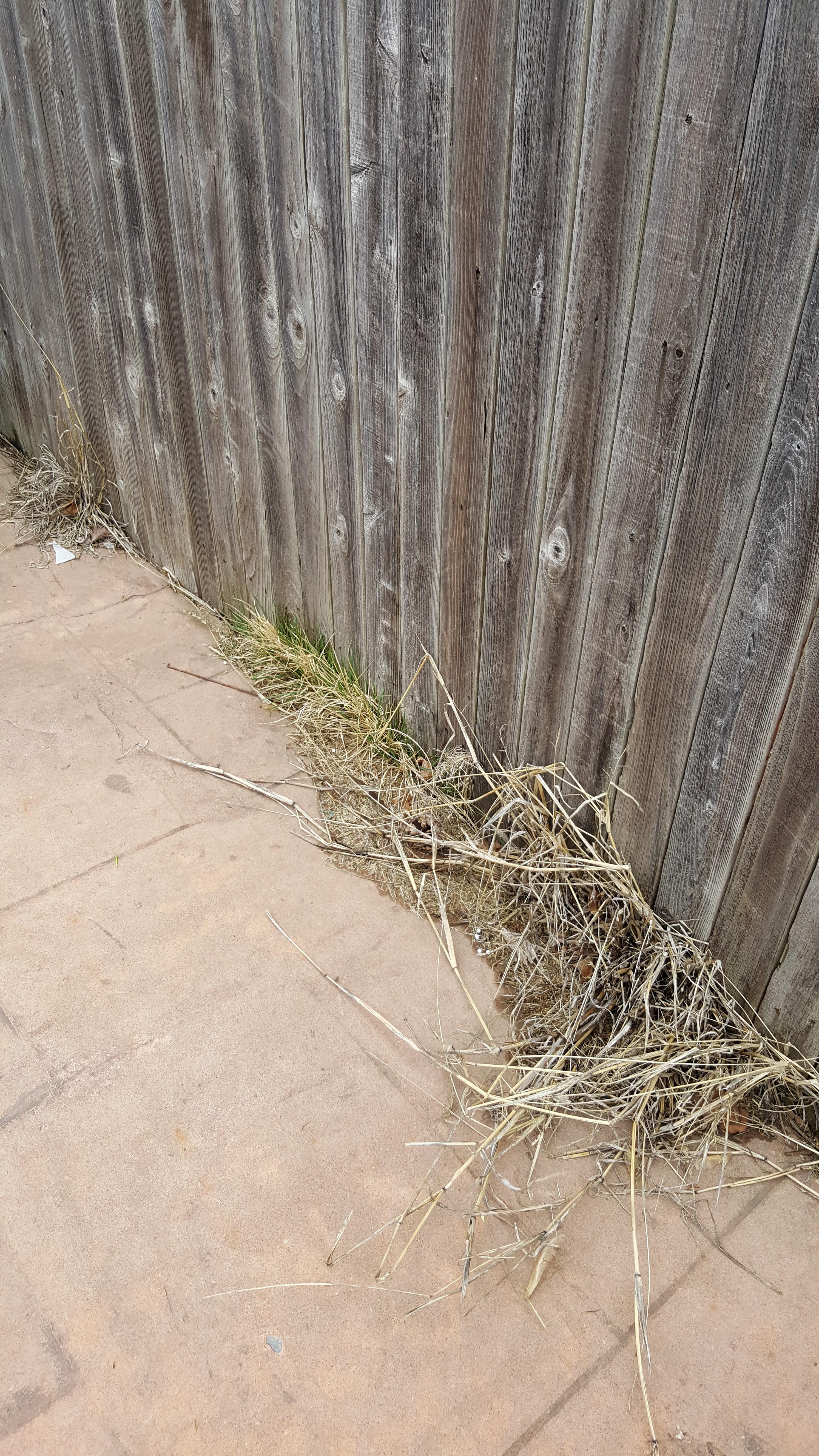 Felipes lawn care llc oklahoma city ok
