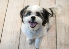 Smiling Dog Photography - Indianapolis, IN