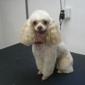 Happy Dogs LLC - Salem, VA