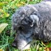 Amber's Dog Walking, Sitting, & Pet Portraits