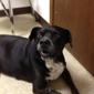 Osage Veterinary Clinic - Bentonville, AR