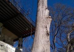 Compton Tree Service