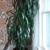 Charlotte Plantscapes Inc