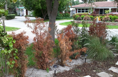 Sunkiss Nursery Pompano Beach Fl One Month Of Watering Everyday As To There