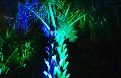 Paradise Palms, Inc. - Raleigh, NC. At night