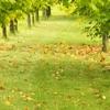 Stride's Tree Service & Stump Removal