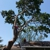 Hurricane Tree Services & Landscaping inc.