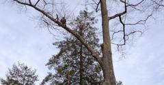 Lewis Tree Service - Vincentown, NJ