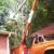 Settlemyre Complete Tree Service