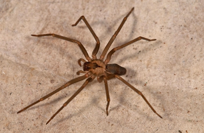1st Response Pest Control - Palmdale, CA