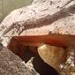 The BeeMan Bee Removal - Phoenix, AZ