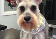 Bully Zone Pet Supplies & Pet Grooming - newark, NJ