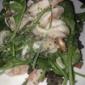 Sotto - Los Angeles, CA. Warm seafood salad