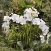 The Stalk Market Fine Silk Florals