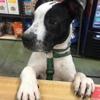 Ma & Paws Pet Supply Company