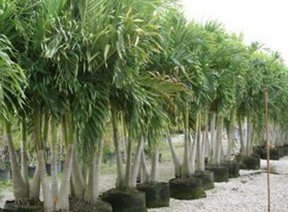 Leserra's Nursery & Landscaping - Coconut Creek, FL