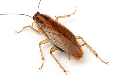 Jeffrey Pest Control - Salt Lake City, UT